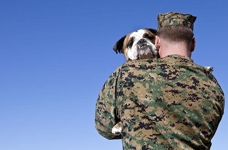 A military man hugs his English Bulldog